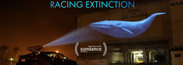 "A new nature documentary, ""Racing Extinction"", was screened at this year's Sundance Film Festival, one of America's largest and most acclaimed independent film festivals pic"